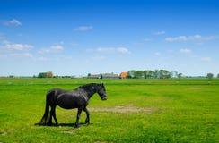 Schönes Pferd im Frühjahr Lizenzfreie Stockfotos