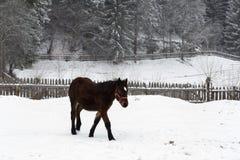 Schönes Pferd im Schnee stockfoto