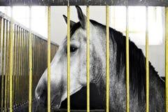 Schönes Pferd innerhalb eines Stalles Stockfoto