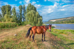 Schönes Pferd nahe See Stockbild