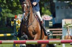 Schönes Pferdenspringen lizenzfreie stockbilder