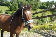 Schönes Ponyporträt Stockfotos