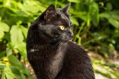 Schönes Porträt der schwarzen Katze im Profilabschluß oben draußen in der Natur im Sonnenlicht Lizenzfreies Stockfoto