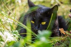 Schönes Porträt der schwarzen Katze mit gelber Nahaufnahme im grünen Gras draußen Stockfoto
