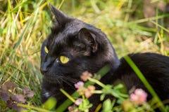 Schönes Porträt der schwarzen Katze mit gelber Nahaufnahme in der Natur Stockbilder
