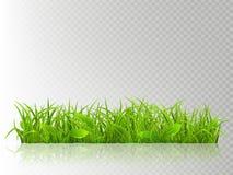 Schönes realistisches führte das frische grüne Gras einzeln auf, lokalisiert auf transparentem Hintergrund Frühlings- oder Sommer stock abbildung