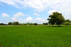 Schönes Reisfeld, Indien lizenzfreie stockfotos