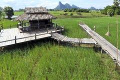 Schönes Reisfeld mit Berg im Hintergrund im phattalung Süd-Thailand stockfotografie
