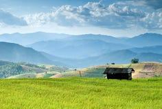 Schönes Reisfeld in Thailand lizenzfreie stockbilder
