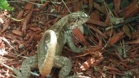 Schönes Reptil Stockfotografie