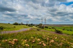 Schönes Rietvlei-Naturreservat nahe Pretoria und Befehlshaber zeichnete mit purpurrotem Pompomunkräuter Campuloclinium-macrocepha stockfotografie