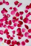 Schönes rotes Foto der rosafarbenen Blumenblätter stockfoto
