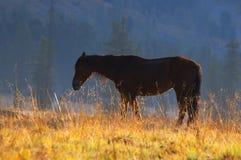 Schönes rotes Pferd. Stockbild