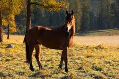 Schönes rotes Pferd. Stockfotos