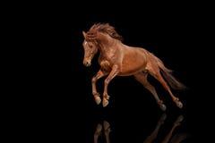 Schönes rotes Pferd, das in eine sich entwickelnde Mähne des Phasensprunges galoppiert Stockbild