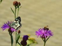 Schönes Schmetterling swallowtail und eine Biene Stockbilder