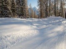 Schöner schneebedeckter Gebirgswald im Engadin. Lizenzfreies Stockfoto