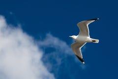 Schönes Seemöweflugwesen auf dem Himmel lizenzfreie stockfotos
