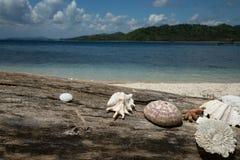 Schönes Seeoberteil, Koralle mit blauem Ozean und weißer Sand setzen auf den Strand Lizenzfreie Stockfotos