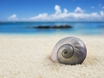 Schönes Seeshell auf dem Strand Lizenzfreies Stockbild