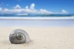 Schönes Seeshell auf dem Strand Stockbild