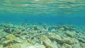 Sch?nes seichtes Wasser Die Sonne scheint durch das Wasser und schwimmt sch?ne Fische stock footage