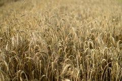 Schönes Sommer-Feld Stockfoto