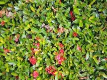 Schönes Spitzenblumenblühen stockbild