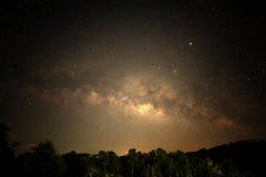 Schönes Sternfeld nachts über Wald Stockfotografie