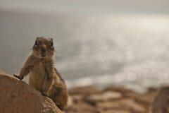 Schönes Streifenhörnchen Lizenzfreie Stockbilder