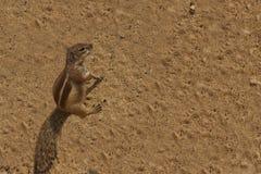 Schönes Streifenhörnchen Stockfoto