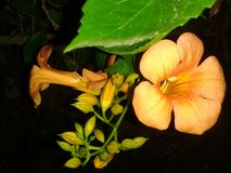 Schönes summerflower lizenzfreies stockfoto
