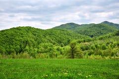Schönes Tal mit Bergen im Hintergrund Stockbild