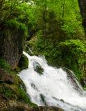 Schönes Tapetenmilchwasserfall-Flussreißender fluss Felsiger Gebirgsfluss Kaukasus in Wald-Isichenko-Wasserfall, Guamka, Mezmay Lizenzfreie Stockbilder