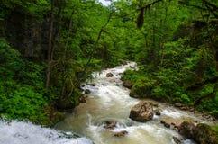 Schönes Tapetenmilchwasserfall-Flussreißender fluss Felsiger Gebirgsfluss Kaukasus in Wald-Isichenko-Wasserfall, Guamka, Mezmay Stockbild