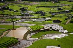 Schönes terassenförmig angelegtes Reisfeld in MU Cang Chai, Vietnam stockbild