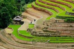 Schönes terassenförmig angelegtes Reisfeld in MU Cang Chai, Vietnam lizenzfreies stockbild