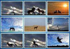 Schönes Tier Pferd, Adler, filin, Rotwild collage Lizenzfreie Stockfotos