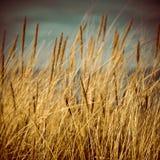 Schönes trockenes Gras und verbogener Hintergrund - achtziger Jahre Retro- Weinlese Lizenzfreie Stockbilder