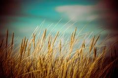 Schönes trockenes Gras und verbogener Hintergrund - achtziger Jahre Retro- Weinlese Stockbild