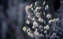 Schönes und schwermütiges Bild von Blumen in der natürlichen Reserve in Irland Stockbilder