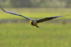Schönes Vogelfliegen im Naturbauernhof Lizenzfreies Stockfoto