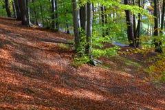 Schönes Waldlandschaft- und -herbstlaub Lizenzfreies Stockbild