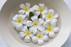 Schönes weißes Plumeriafloss auf dem Wasser Lizenzfreies Stockfoto