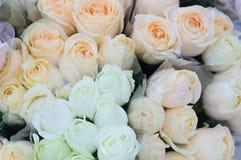 Schönes weißes und Sahne stiegen für Valentine Day Lizenzfreie Stockfotos