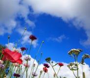 Schönes Wiesenfeld mit wilden Blumen Frühling Wildflowersnahaufnahme Stellen Sie schützende Schablone und die Pille gegenüber, di Lizenzfreie Stockbilder