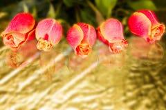 Schönes wild wachsendes Scharlachrot Rose Stockfoto