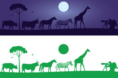 Schönes wilde Tier-Wand-Abziehbild Lizenzfreie Stockfotos