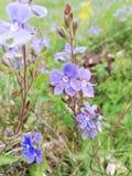 Schönes wildes Nature& x27; rosa Blume s lizenzfreies stockfoto