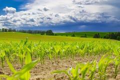 Schönes Wolkenfeld der Natur Lizenzfreies Stockfoto